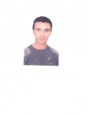 walid 33 y.o. from Egypt